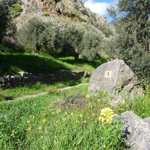 Hike Delphi to Ancient Port of Kirra 1
