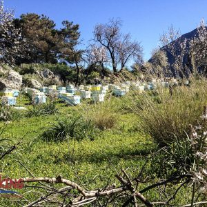 Hike Delphi to Ancient Port of Kirra 8