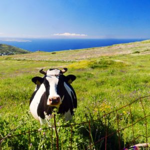 Tinos Self Guided Hiking Tour 31